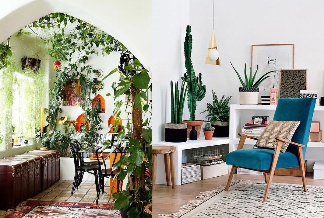 17 ideas para decorar tu sala de estar con plantas en esta for Ideas para decorar techos interior
